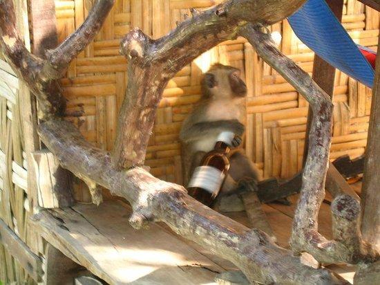 Lanta Top View Resort: Обезьяна на веранде бунгало