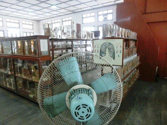 Siriraj Medical Museum - Picture of Siriraj Medical Museum ...