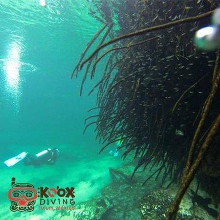 Koox Diving : A magic DIve @casacenote … enjoy the view