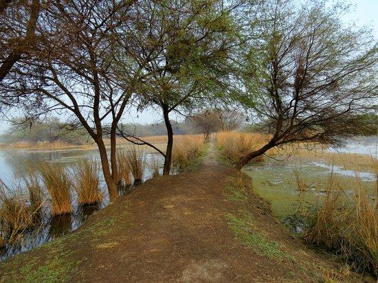 Sultanpur National Park Bird Sanctuary: Sultanpur Bird Sanctuary