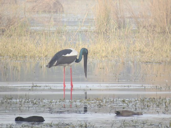 Sultanpur National Park Bird Sanctuary: Bird