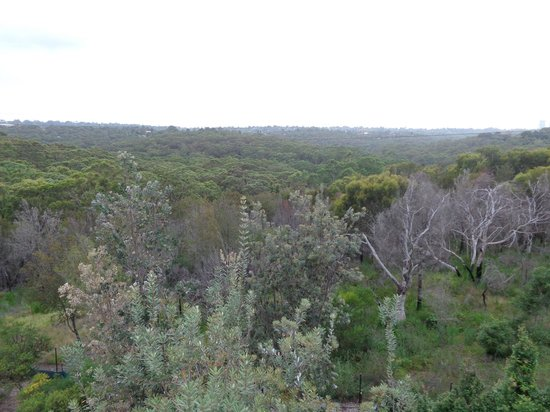 Quest North Ryde: Bushland view - from room balcony