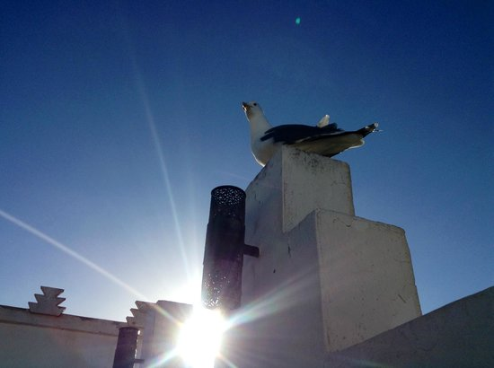 Riad Malaika: Dachterrasse