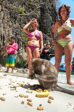 Asian Dolphins Day Tours: See wild monkeys on the beach