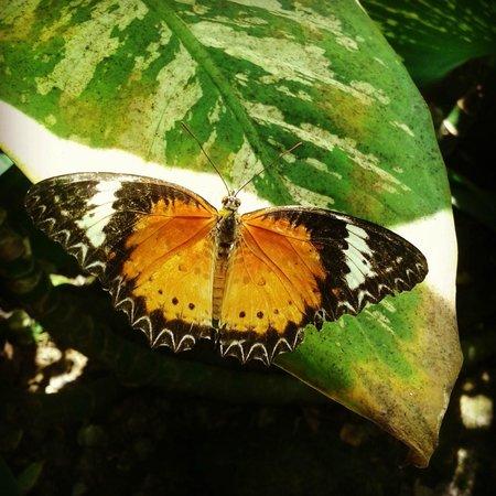 Entopia: butterfly 1