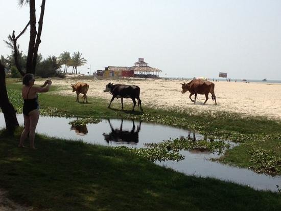 The Zuri White Sands Goa Resort & Casino: вид на море с пляжа гостиницы