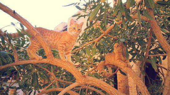 Movenpick Resort & Spa Dead Sea: kittehs!