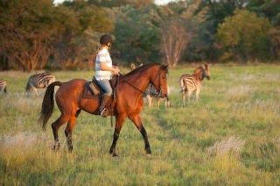 Horizon Horseback Adventures Lodge