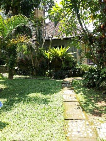 Ben's Homestay : Garden