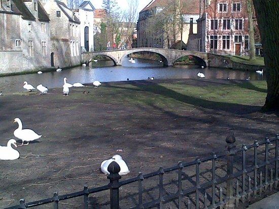 Boottochten Brugge : Waterways