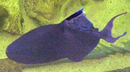 Mauritius Aquarium : Aquarium