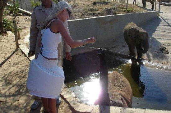 Friguia Park: Кормлю слоника