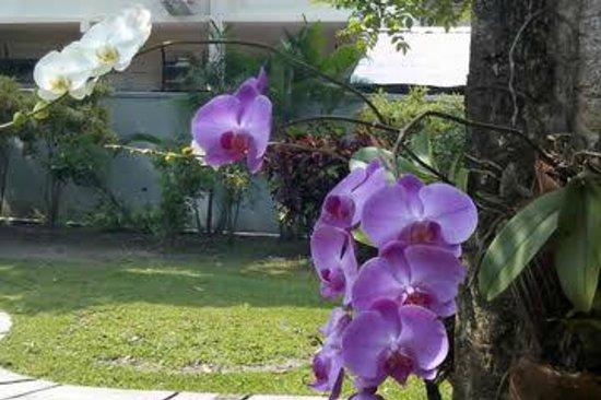 Royal Ambarrukmo Yogyakarta: orchids at the garden