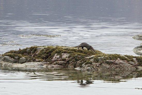 Craiglinnhe House: Otter outside the Hotel
