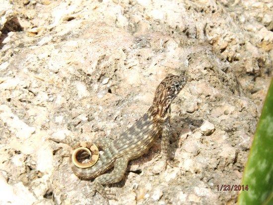 Bellevue Puntanera Playa Caleta: critters