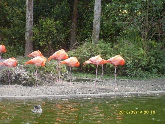 Honolulu Zoo: Flamigos