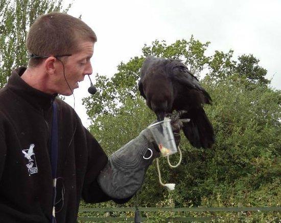 Gauntlet Birds of Prey: Raven