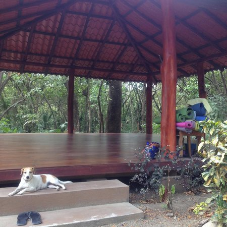 Shaka Beach Retreat: Shaka's private outdoor yoga shala just steps away from the cabinas surrounded by beautiful jung