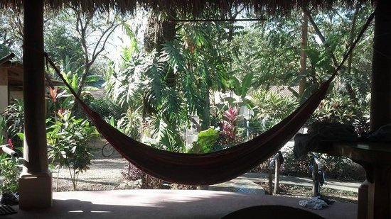 Shaka Beach Retreat : One of many hammocks -- view from the open-air rancho looking toward the yoga shala.