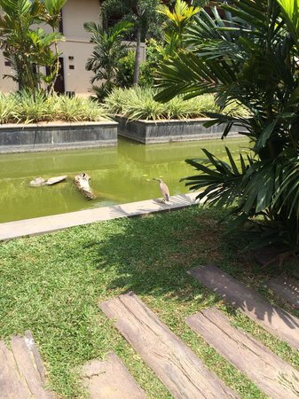 Portofino Resort Tangalle: Lovely mini lake