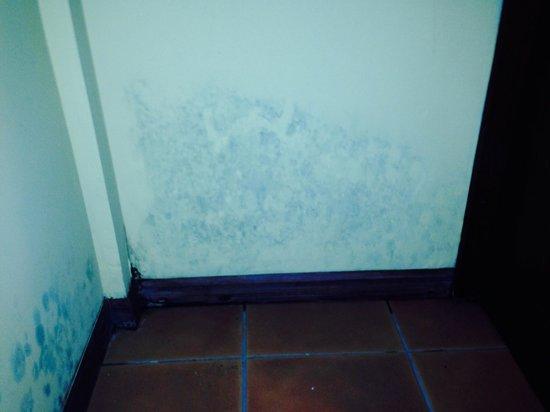 Arenal Lodge : Mold/mildew in guestroom