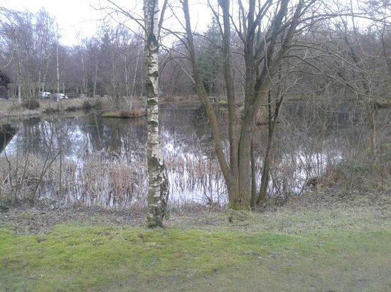 Chevin Country Park Hotel & Spa: lake at rear of hotel