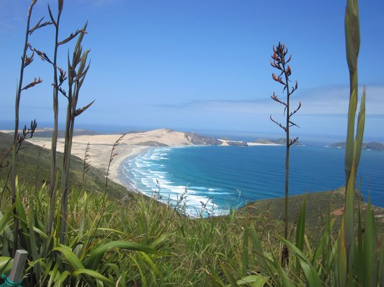 Harrisons Cape Runner: Cape Reinga