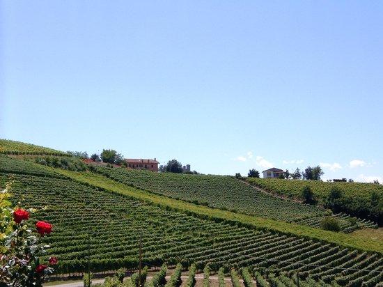 Серралунга-д'Альба, Италия: i vigneti