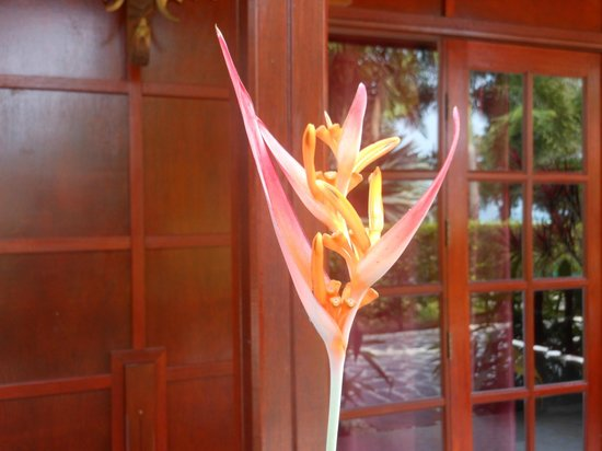 Cyana Beach Resort : An example of the flora in the hotel grounds