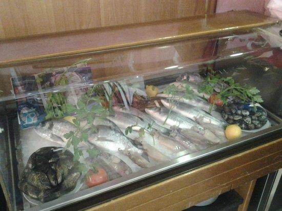 San Marco: foto esposizione pesce