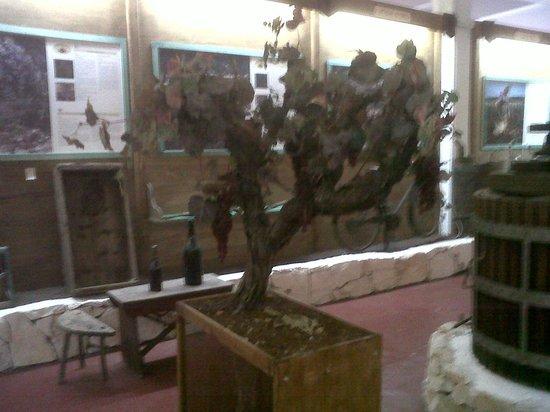 Cantina Albea winery and museum: la vite alberello
