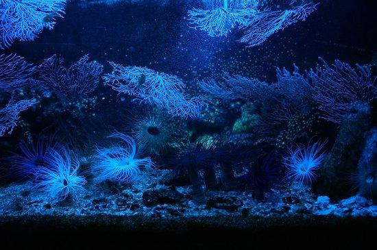 Grand Aquarium : aquarium