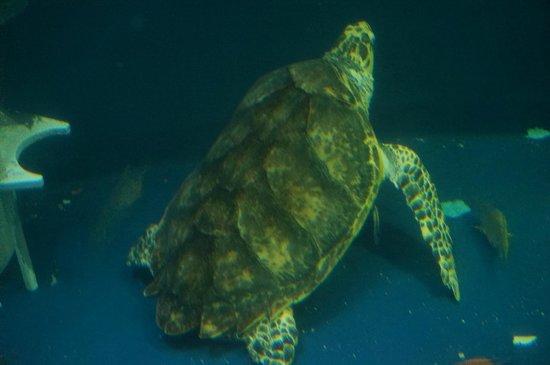 Grand Aquarium : aquarium circulaire