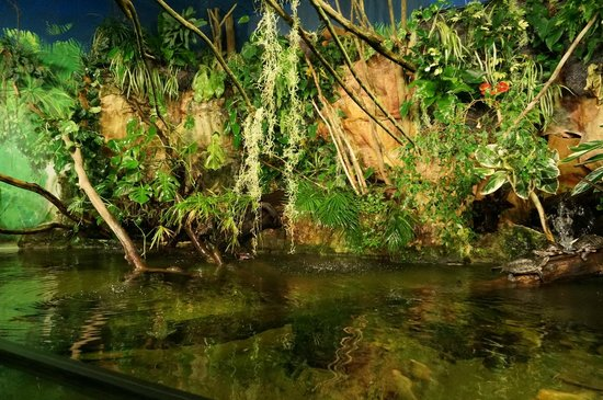 Grand Aquarium : zone tropicale