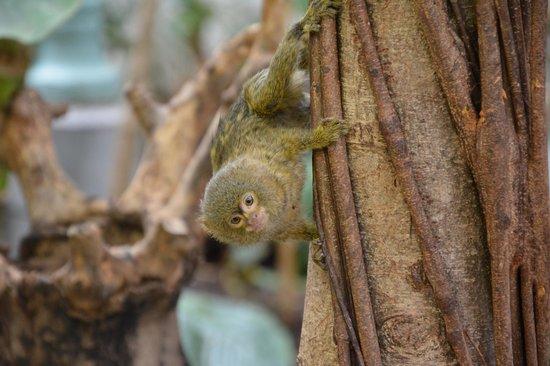 ARTIS Amsterdam Royal Zoo: monkey