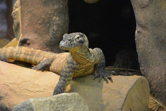 ARTIS Amsterdam Royal Zoo: dragon