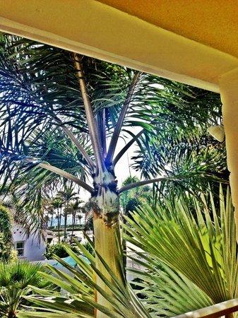 Alhambra Beach Resort: From the balcony.....