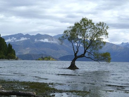 Wanaka i-SITE Visitor Information Centre: Lone tree on island just off shore of Lake Wanaka