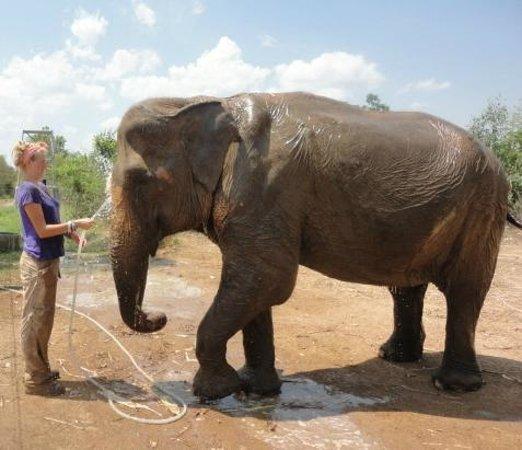 Bathing the Beast - Bild von Wildlife Friends of Thailand ...