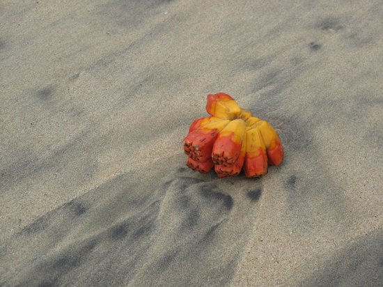 Kadju House: washed up fruit on the beach