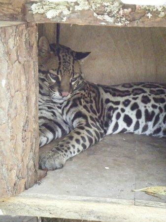El Nispero Zoo and Botanical Garden: sehr kleines Gehege -