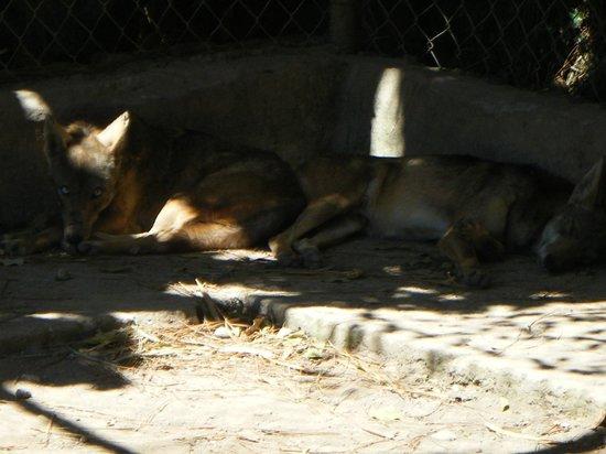 El Nispero Zoo and Botanical Garden: viel zu kleines Gehege