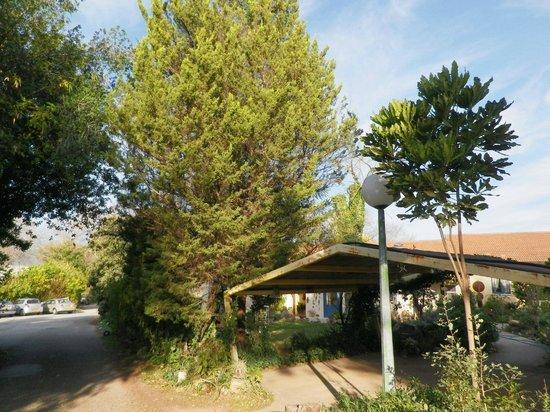Hagoshrim Hotel & Nature: Many trees...