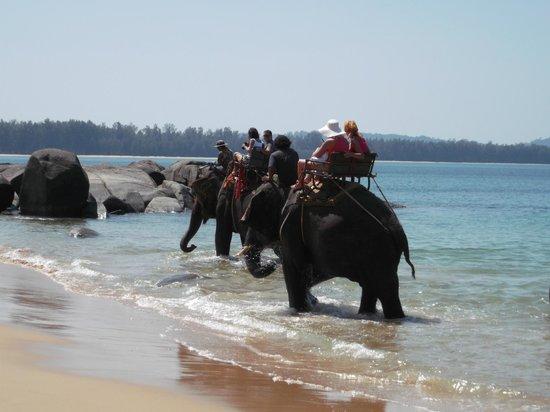 Khaolak Merlin Resort: Elephants bathing at the beach