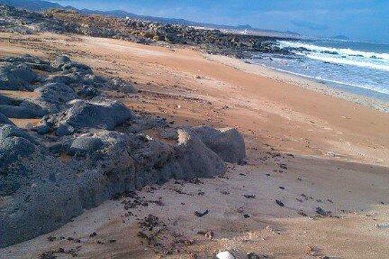 Aparthotel Oasis Tropical: Jeszcze dzika plaża Las Caletillas