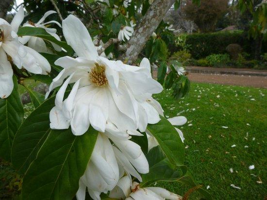 Palheiro Gardens: GARDEN