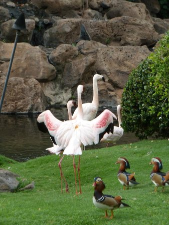 Hyatt Regency Maui Resort and Spa: many exotic birds on grounds
