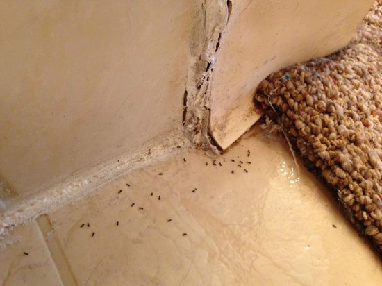 Hale Kamaole: bugs coming out of rotten bathroom shower surround