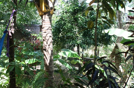 Don Diego de la Selva: Le jardin