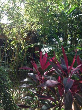 Don Diego de la Selva: Promenade dans le luxuriant jardin